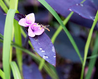 Insektenbestäubung Stockbild