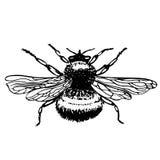 Insektenbiene - Tätowierungsskizze Stockbild