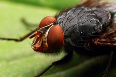 Insektenfliege Stockfoto