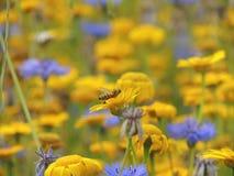 Insektengarten Stockfotos