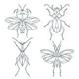 Insektenikonen, Vektorsatz Abstrakte dreieckige Art Gottesanbeterin, Heuschrecke, Ameise, Rüsselkäferkäfer Stockbild