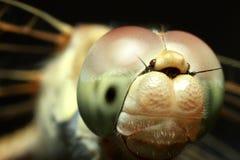Insektenlibelle Lizenzfreies Stockbild