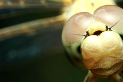 Insektenlibelle Lizenzfreie Stockbilder