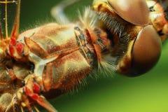Insektenlibelle Stockbild