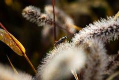 Insektenmorgenschließen Makrotau-Wassertropfen oben lizenzfreie stockfotos