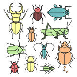 Insektensammlung Lizenzfreies Stockbild