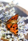 Insektenschmetterlingsbienenstock stockfoto