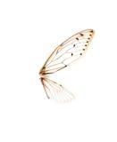 Insektenzikade lokalisiert auf weißem Hintergrund Stockfotos