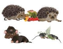 Insektivoor zoogdieren stock illustratie