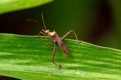 Insektmakro, Laos Stockfotos