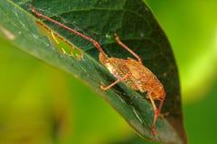 Insektmakro, Laos Stockfotografie