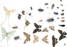Insektprobenmaterial Stockbild