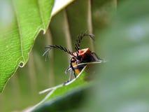 Insekty Fotografia Royalty Free