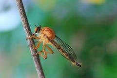 insekty Obrazy Royalty Free