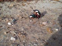 insekty Zdjęcie Stock
