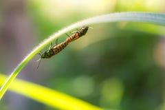 insekty Obraz Stock
