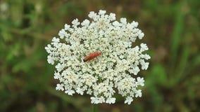 insekty zdjęcie wideo