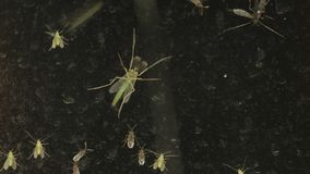 Insekty na okno zdjęcie wideo