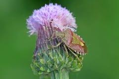 Insekty na zielonej roślinie w dzikim Zdjęcie Stock