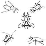 insekty nakreślenie ręką tła rysunku ołówka drzewny biel Obrazy Royalty Free