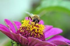 Insekty: pluskwy i komarnicy na lato kwiatach fotografia stock
