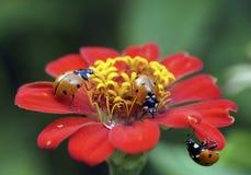 Insekty: pluskwy i komarnicy na lato kwiatach fotografia royalty free