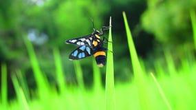 Insekty, ryż, zieleń, liście, Zdjęcie Stock