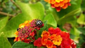 Insekty w kwiatach podczas wiosny Zdjęcia Stock