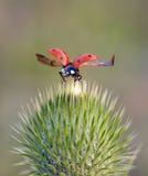 Insekty w naturze fotografia royalty free