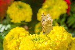 Insekty w parku i kwiaty fotografia royalty free
