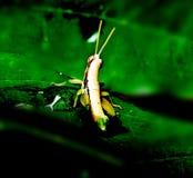 Insekty wchodzić do w świat Fotografia Stock