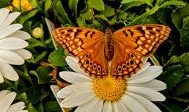 Insekty wiosna fotografia stock