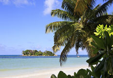 Insel Chauve Souris im Indischen Ozean Stockbilder