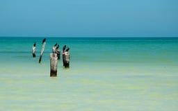 Insel Holbox Stockfoto