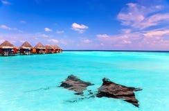 Insel im Ozean, in den overwater Landhäusern und in einem Adlerstrahl Stockbild