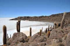 Insel Incahuasi Salar de Uyuni, Bolivien stockbilder