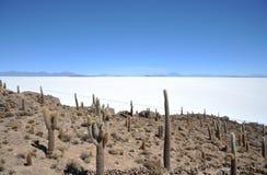 Insel Incahuasi Salar de Uyuni, Bolivien stockfotografie
