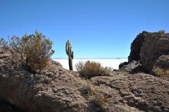 Insel Incahuasi Salar de Uyuni, Bolivien lizenzfreie stockfotografie