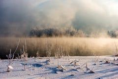 Insel mit Bäumen mitten in dem Wasser, bedeckt durch Nebel stockfoto