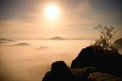 Insel mit Baum im nebelhaften Ozean Vollmondnacht im schönen Berg Sandsteinspitzen erhöht vom schweren sahnigen Nebel Lizenzfreies Stockfoto