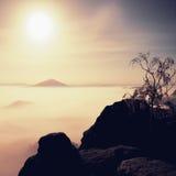 Insel mit Baum im nebelhaften Ozean Vollmondnacht im schönen Berg Sandsteinspitzen erhöht vom schweren sahnigen Nebel Stockfotografie