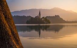 Insel mit Kirche in ausgeblutetem See, Slowenien bei Sonnenaufgang lizenzfreies stockbild