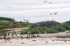 Insel-Nest lizenzfreie stockbilder