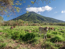 Insel Ometepe in Nicaragua Lizenzfreie Stockfotos