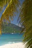 Insel-Palme-Segeln Lizenzfreie Stockfotos