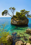 Insel und Bäume in Brela, Kroatien Stockfotos