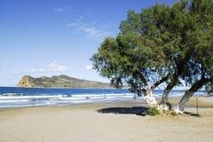 Insel und Baum stockfoto