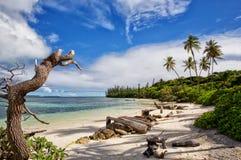 Insel von Kiefern Lizenzfreie Stockfotos