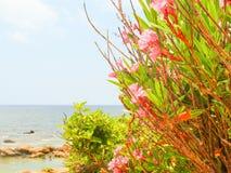 Insel von Krete Stockfoto