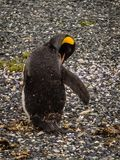 Insel von Pinguinen im Spürhund-Kanal, Ushuaia, Argentinien lizenzfreies stockfoto